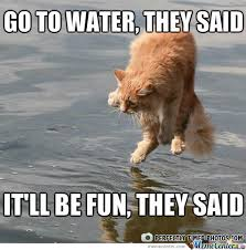 Water Meme - water cat by tara794 meme center