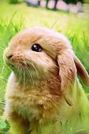 how to draw cute rabbit bunny 1 0 apk by siriwun adwinja details
