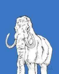 1900 wooly mammoth original antique animal dinosaur print 25 50