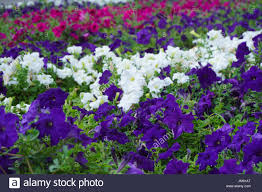 different shades of purple stock photos u0026 different shades of