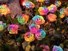 tie dye roses tie dyed roses mrreid org