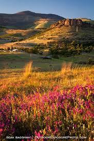 Ashland Flowers - grizzly peak wildflowers 2 stock image ashland oregon landscape