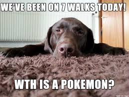 Tired Dog Meme - pokemon go from a dog s perspective meme on imgur