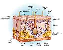 Human Anatomy And Physiology Case Studies Human Anatomy Course Introduction To Free Anatomy Course