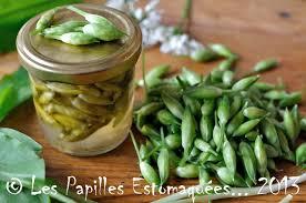 cuisiner l ail boutons floraux d ail des ours au vinaigre et baies les papilles