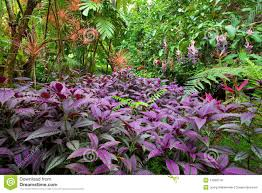 native plants in tropical rainforest tropical rainforest flowers colorful lush tropical rain forest