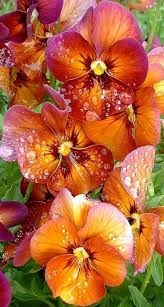 399 best images about flowers on pinterest gardens bearded iris
