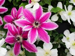 flower plants flowers and plants for your garden hgtv