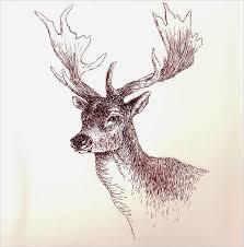 25 best deer sketches images on pinterest deer sketch sketching