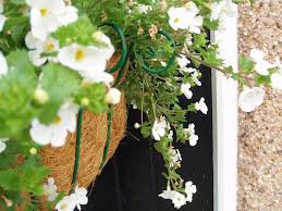 hanging herb baskets how to make an herb garden in a basket