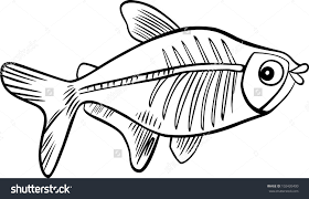 x ray fish coloring page wallpaper download cucumberpress com
