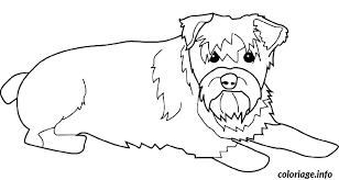 coloriage dessin chien schnauzer jecolorie com