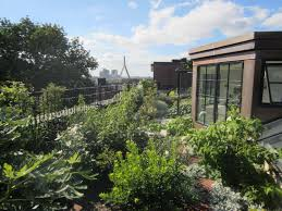 garden residential rooftop garden ideas with green roof concepts