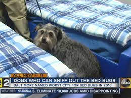 Chicago Bed Bug Experts Baltimore Company Uses Dogs To Detect Bed Bugs Abc2news Com