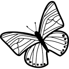 butterfly of thin stripes wings pattern rotated to left from top
