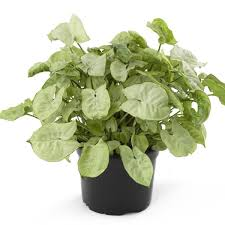 34 poisonous houseplants for dogs plants toxic to dogs balcony
