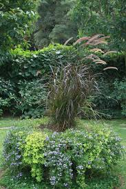 plant ornamental grass in your fall garden