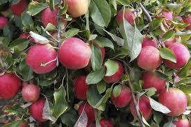 chambre d agriculture 76 portes ouvertes pour ma pomme