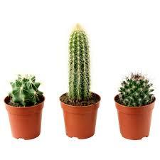 plants plant pots u0026 stands plants ikea