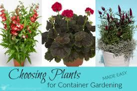 garden plants archives