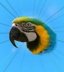 create meme paranoid parrot parrot paranoid parrot meme parrot