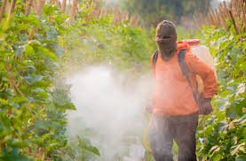 illegal herbicide use on monsanto gmos spurs bitter complaints ewg