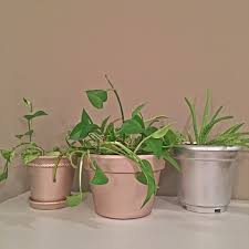 8 Pots by Makeovermonday Old Dirty Pots From The Porch U2013 The Daily Starr