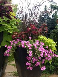 Summer Container Garden Ideas 501 Best Container Plants For Sun Images On Pinterest Best