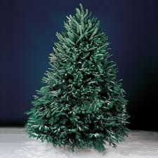 live christmas trees the freshly cut christmas trees hammacher schlemmer