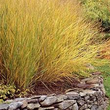 top 10 plants for coastal gardens grasses gardens and plants