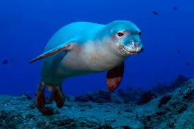 marine animals in greece greeka com blog