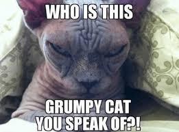 Hairless Cat Meme - grumpy cat 039 s arch nemesis owned com