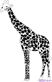 easy giraffe drawings google search animals for drawing