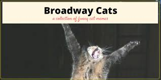 Cats Memes - broadway musical cat memes plus friday frivolity munofore
