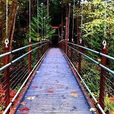 Washington State Botanical Gardens Bellevue Botanical Gardens The Ravine Experience Path Bellevue