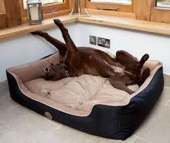 viopet lola u0027s lounger dog bed