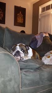 Couch Potato Gif 44 Best Guilty Pets Images On Pinterest Animals Funny Animals