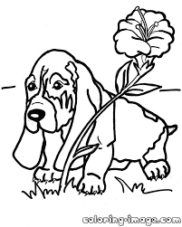 basset hound puppy with a flower free coloring pages for kids