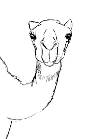 38 best camel images on pinterest animals animal drawings and