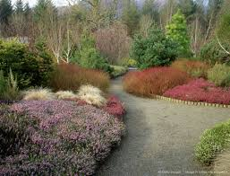 image detail for winter garden rosemoor with cornus