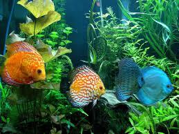 fish hd clipart