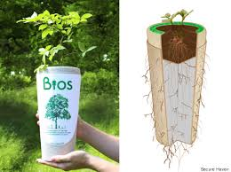 biodegradable urn biodegradable urn gives you after by growing a tree