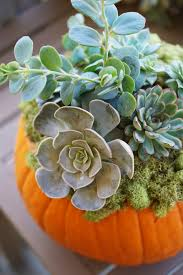 diy home decor tutorial pumpkin succulent centerpiece diy home decor tutorial how to make a pumpkin succulent centerpiece