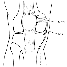 Diagram Of Knee Anatomy Knee Biomechanics Recon Orthobullets Com