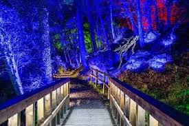 enchanted forest of light tickets enchanted forest sound and light show in bishopton renfrewshire