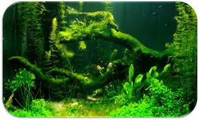 algae boon or curse to your aquarium saltwater and freshwater