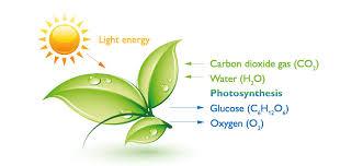 light and plant growth led grow lights carbeth eco