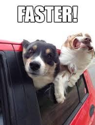 Funny Dog Face Meme - funny dog face meme