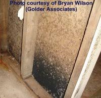 black mildew on damp basement walls and ceilings