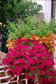 3106 best container gardening images on pinterest gardening